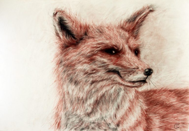 red sepia conté drawing of fox