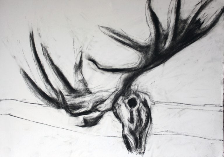 black and white charcoal drawing of elk skull