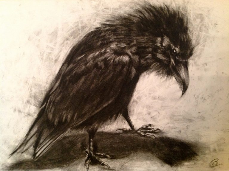 black and white Charcoal drawing of raven