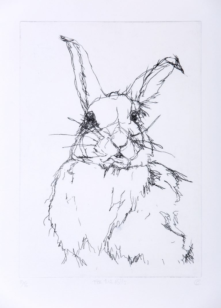 black and white Etching of hare