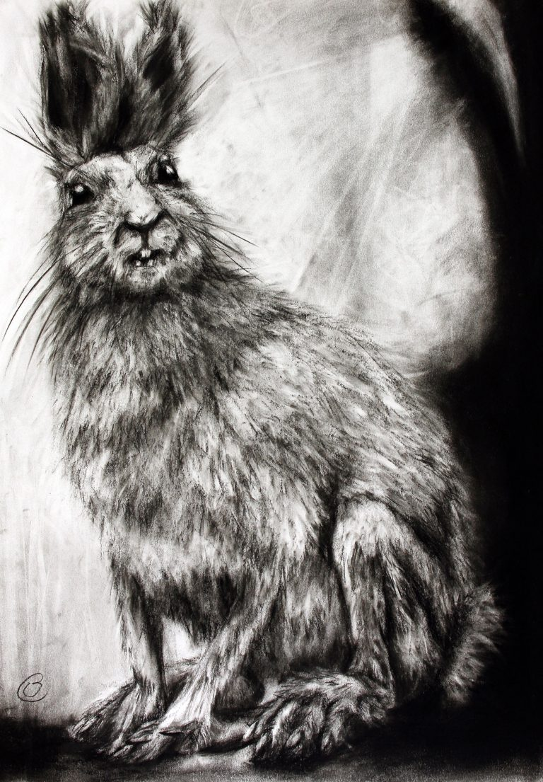 black and white charcoal drawing of hare